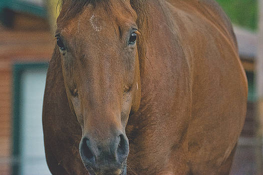 Horse - Benson - Ready for My Close Up by Black Brook Photography