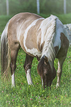 Horse - Bonnie by Black Brook Photography