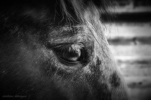 Horse Closeup Portrait Black and White Photography by Melissa Bittinger