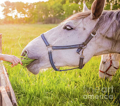 Horse In Heaven with Love by Peggy Franz