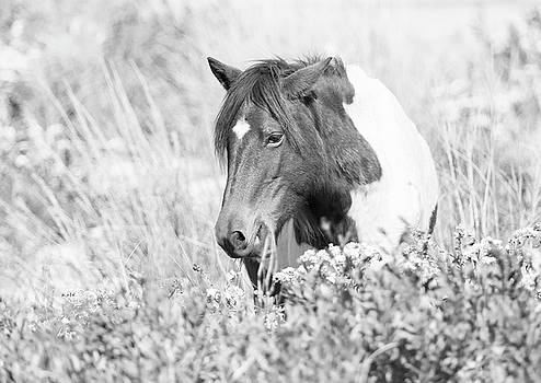 Horse in Meadow Black and White by Stephanie McDowell