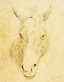 Horse  by Jeremy Martinson