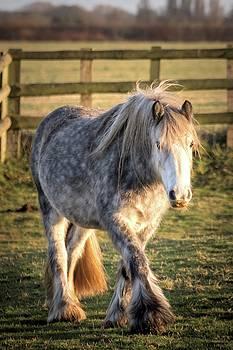 Horse by Jeremy Sage