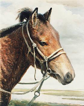 Horse by Ji-qun Chen