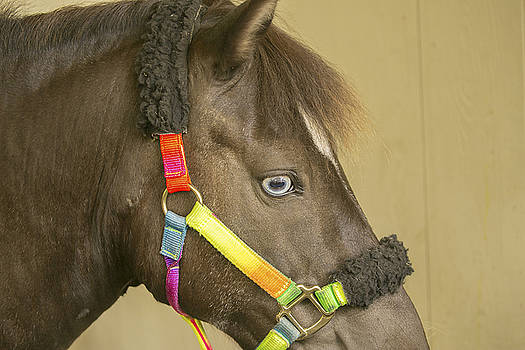 Horse by Michel DesRoches