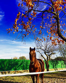 Horse by Niki Mastromonaco