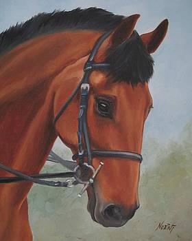 Jindra Noewi - Horse Portrait