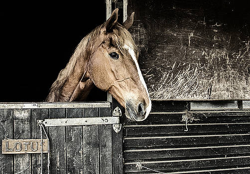 Horse Profile in the Stable by Marion McCristall