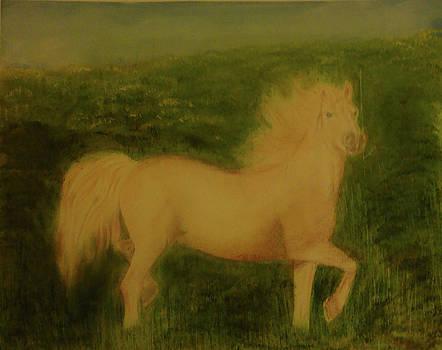 Horse by Reza Naqvi