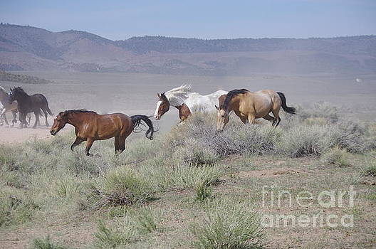 Horse Run by Deniece Platt