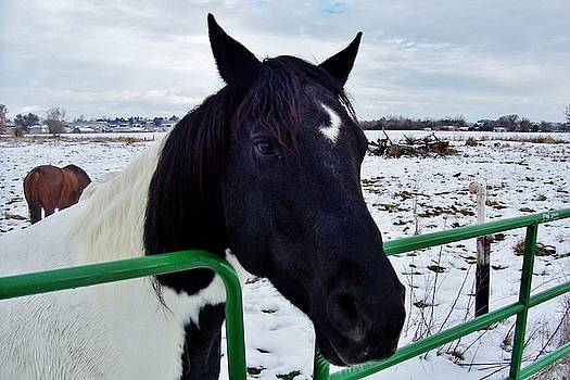 Horse Talk in Winter by Peggy Leyva Conley