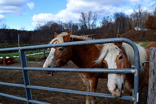 Horses at the gate by Diane Lent