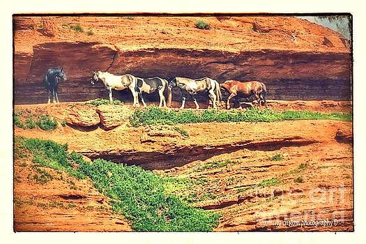 Horses basking in the sun by Carole Martinez