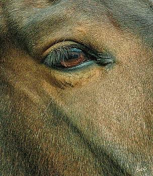 Horses eye by Bruce Carpenter