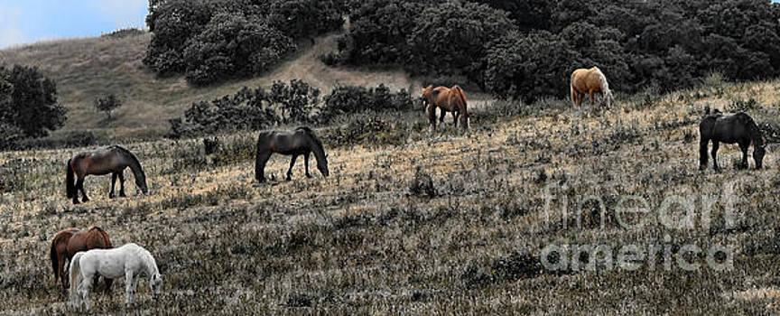 Chuck Kuhn - Horses Free