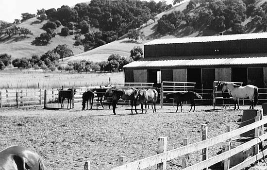 Horses Gathered in Corral by Peggy Leyva Conley