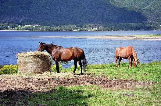 Horses Grazing By Ocean by Elaine Manley