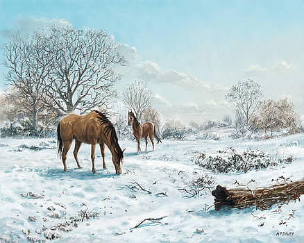 Horses in Countryside Snow by Martin Davey