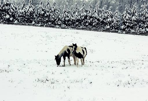 Horses in snow by Terry and Brittany Sprinkle