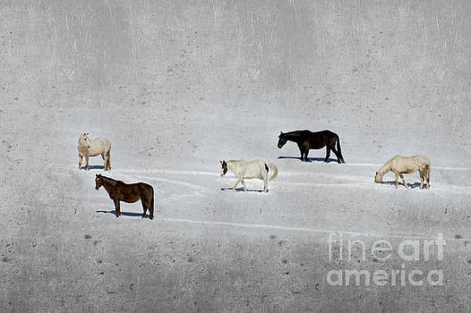 Dan Friend - Horses in the snow