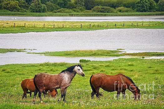 Horses, North Sea  by Angela Doelling AD DESIGN Photo and PhotoArt