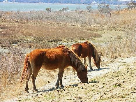 horses of Assateague 2 by Diane Valliere
