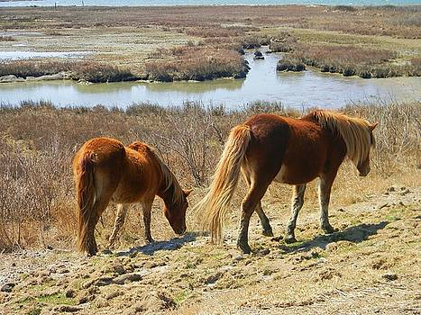 Horses of Asseteague by Diane Valliere