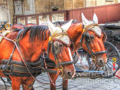 horses of Vienna by Yury Bashkin