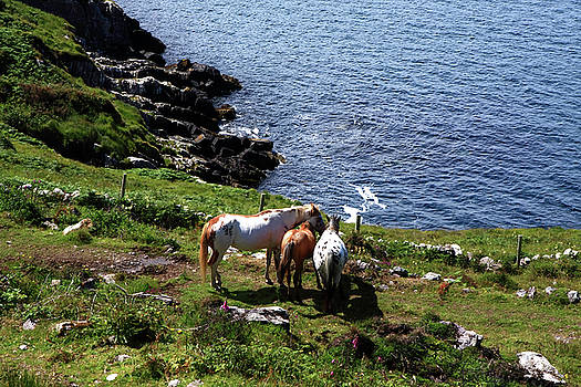 Horses On The Coast by Aidan Moran