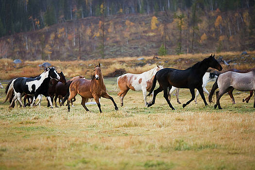 Horses by Sharon Jones