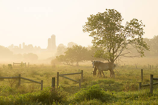 New Holland (PA) United States  city pictures gallery : Seth Dochter Artwork for Sale New Holland, PA United States
