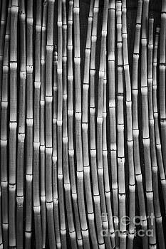 Horsetails Black and White by Edward Fielding