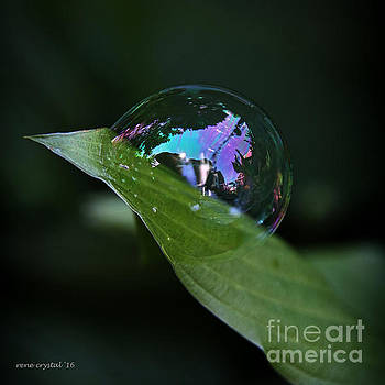 Hosta's BBF..Bubble Best Friend by Rene Crystal