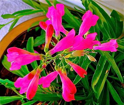 Hot Flowers by E Robert Dee