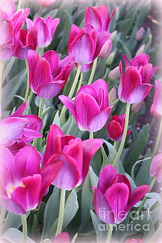 Hot Pink Tulips by Dora Sofia Caputo Photographic Art and Design