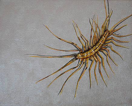 House Centipede by Jude Labuszewski