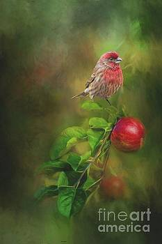 House Finch on Apple Branch by Janette Boyd