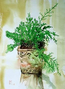 Asparagus Fern by Pete Maier