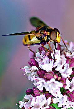 Hoverfly by Bev  Brown
