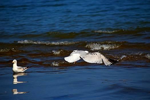 Hovering by Amanda Struz