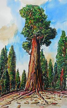 Huge Redwood Tree by Terry Banderas