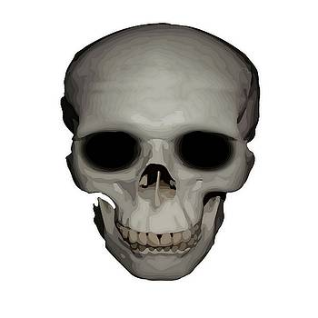 Tracey Harrington-Simpson - Human Skull Vector Isolated