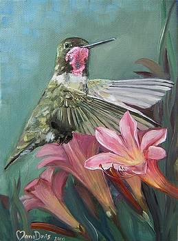 Humming bird Anna by Mona Davis