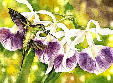 Humming Bird With Orchids by Alfred Ng