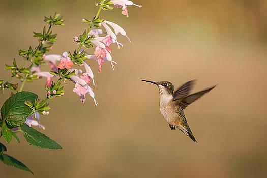 Happy Hummingbird by Penny Meyers