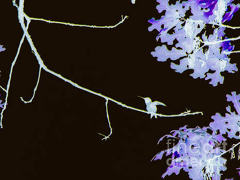 Hummingbird Abstract by Diane McDougall