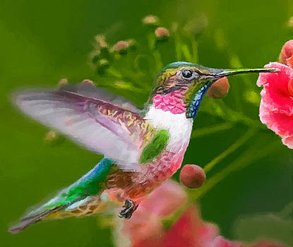 Hummingbird and Flower Painting by Dr Bob Johnston