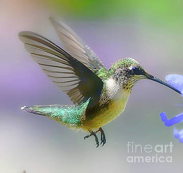 Hummingbird  And Nectar  by Peggy Franz
