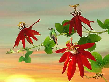 Hummingbird and Passion Flowers by IM Spadecaller
