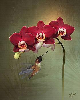 Hummingbird and Three Crimson Orchid Blossoms by Matthew Schwartz